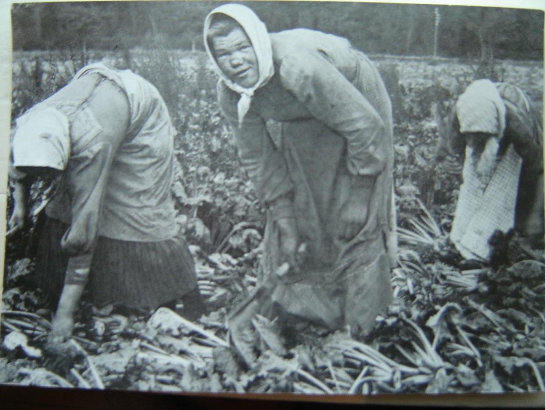 polske roearbejdere